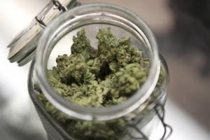 Wszystko co musisz wiedzieć o medycznej marihuanie, CBDLeczy.pl