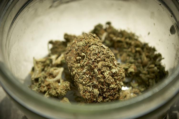 To co Musisz Wiedzieć o Medycznej Marihuanie, CBDLeczy.pl