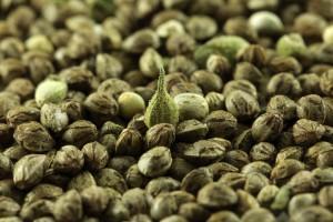 marihuana-lecznicza-medyczna-luskane-nieluskane-nasiona