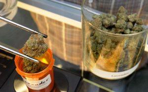 marihuana-szczypce-roslina-suszona