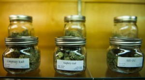marihuana-w-sloiku-marihuana-cannabis-konopia-medyczna