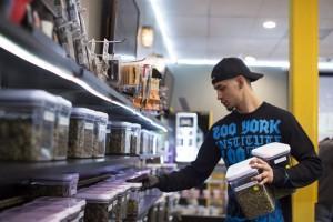 medyczna-marihuana-kiedy-w-polsce-thc-cbd