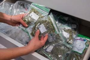 Badania pokazują, że marihuana góruje nad obecnie dostępnymi lekami na Alzheimera, CBDLeczy.pl