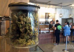 medyczna-marihuana-ielona-marihuana-marihuana-marihuana