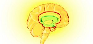 fakty-na-temat-medycznej-marihuany-mozg-wplyw-na-mozg-i-inne-organy