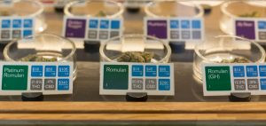 Osoby, które uprawiają medyczną marihuanę dla innych będą poddane rosnącej kontroli w ramach nowej inicjatywy stanu, CBDLeczy.pl