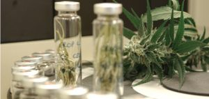 marihuana-narkotyk-czy-lek-medyczna-czy-rekreacyjna-to-nie-narkotyk-to-lek