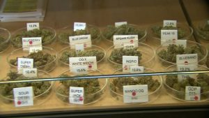 marihuana-cannabis-medyczna-marihuana-cannabis