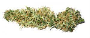 5 odmian marihuany, które leczą uczucie lęku oraz niepokój, CBDLeczy.pl