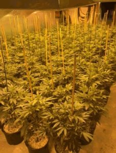 Aresztowano 5 osób za narkotyki o wartości 390.000 dolarów, CBDLeczy.pl