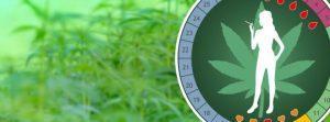 Badania na temat marihuany i menstruacji, CBDLeczy.pl
