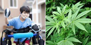 Cannabis może pomóc dzieciom cierpiącym na porażenie mózgowe, CBDLeczy.pl