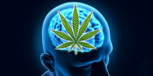 Wpływ codziennego palenia na mózg, CBDLeczy.pl