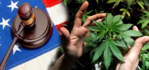 Potencjał cannabis w zaburzeniach endokrynologicznych, CBDLeczy.pl