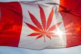 Marihuana w USA, CBDLeczy.pl