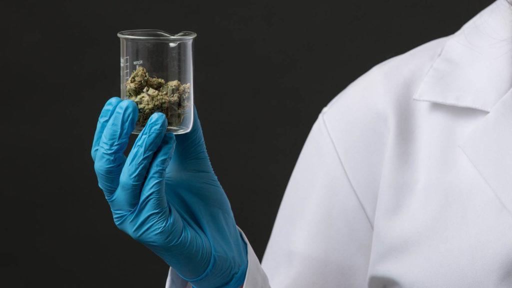 Marihuana łagodzi bóle nowotworowe, CBDLeczy.pl