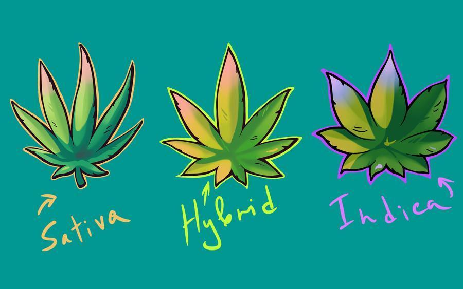 Czy produkty spożywcze z marihuaną są dla Ciebie odpowiednie?, CBDLeczy.pl