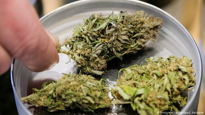 Jaskra i marihuana   oto jak to działa, CBDLeczy.pl