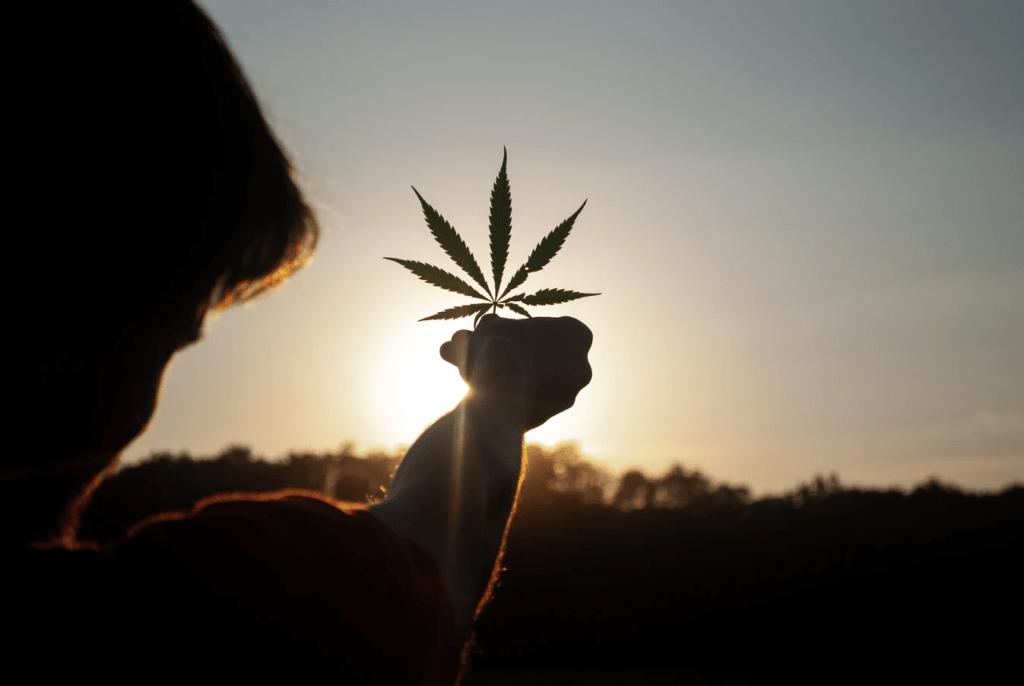 Medyczna Marihuana, CBDLeczy.pl