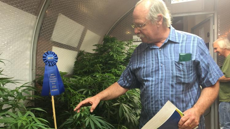 Prawie Połowa Użytkowników Cannabis ma Ponad 40 Lat, CBDLeczy.pl