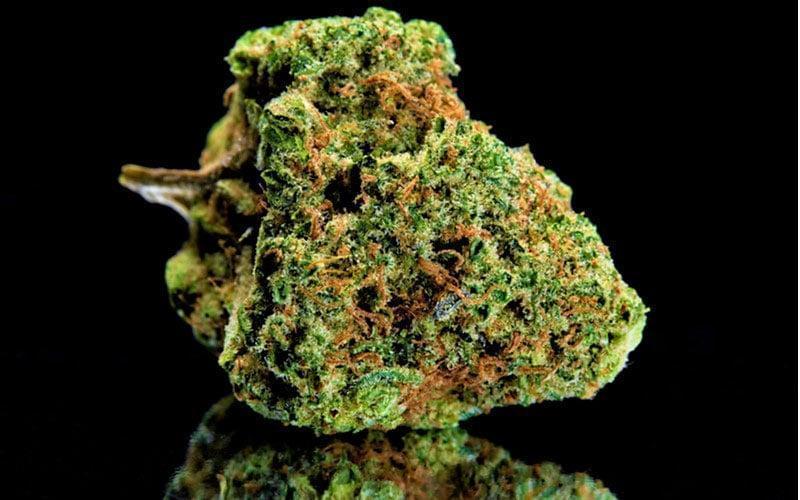 Stereotyp Leniwego Palacza Marihuany, CBDLeczy.pl